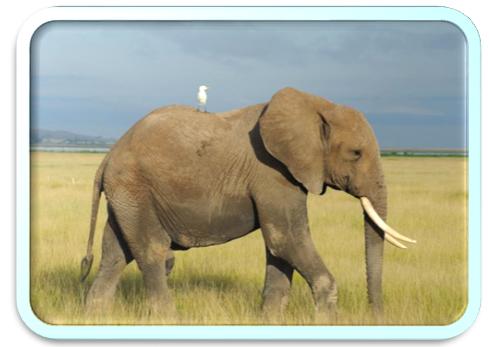 Год Слона