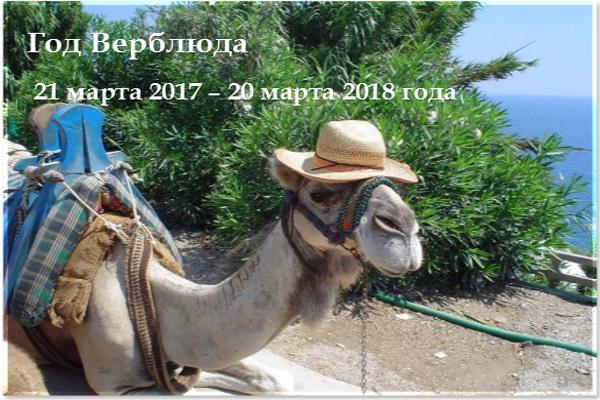 Год Верблюда 2017