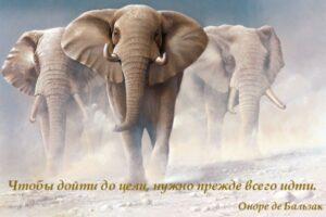 Год Слона 2020